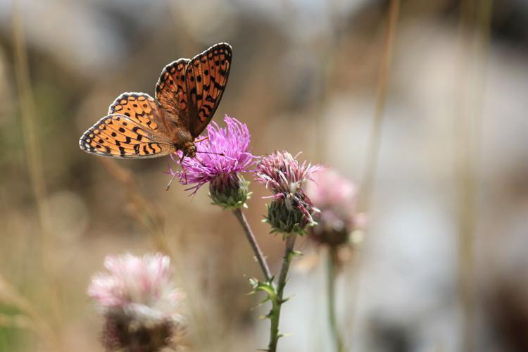 Chiffre © Marc Corail - Parc national des Ecrins